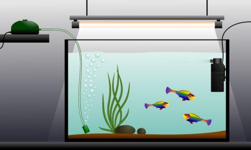 Запуск аквариума:аквариум с тремя рыбками,подсветкой,компрессором и фильтром.